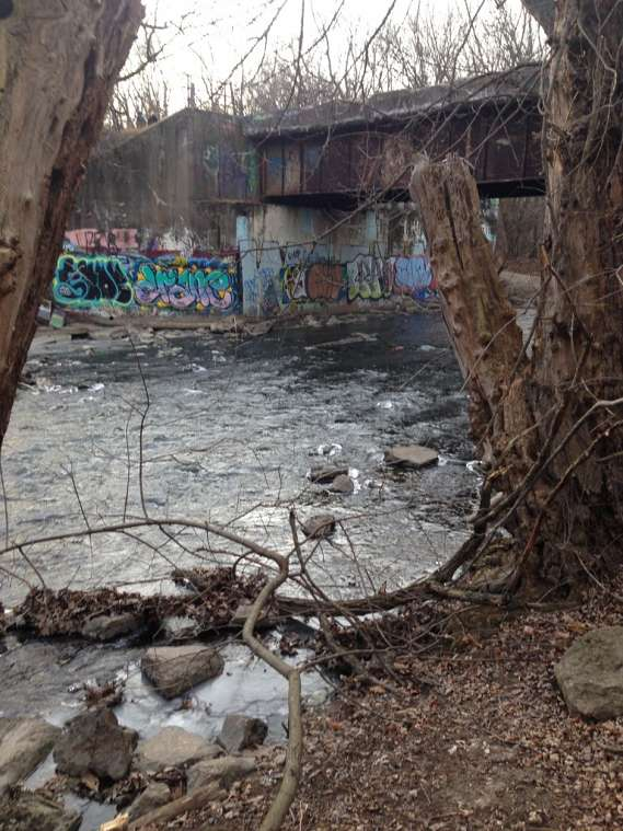 A stream with a graffitied concrete embankment.
